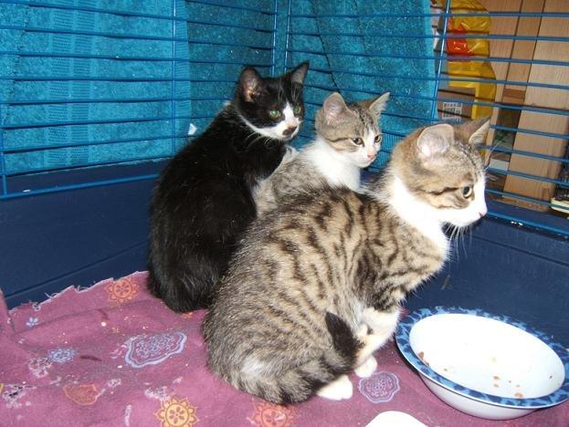 chatsdelaplaine17juillet08014.jpg